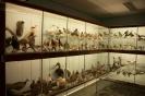 het Visserij Museum in Breskens_8